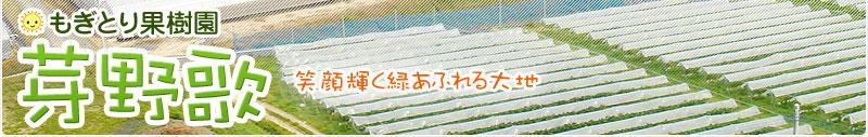 観光農園 もぎとり果樹園 芽野歌(めのか)
